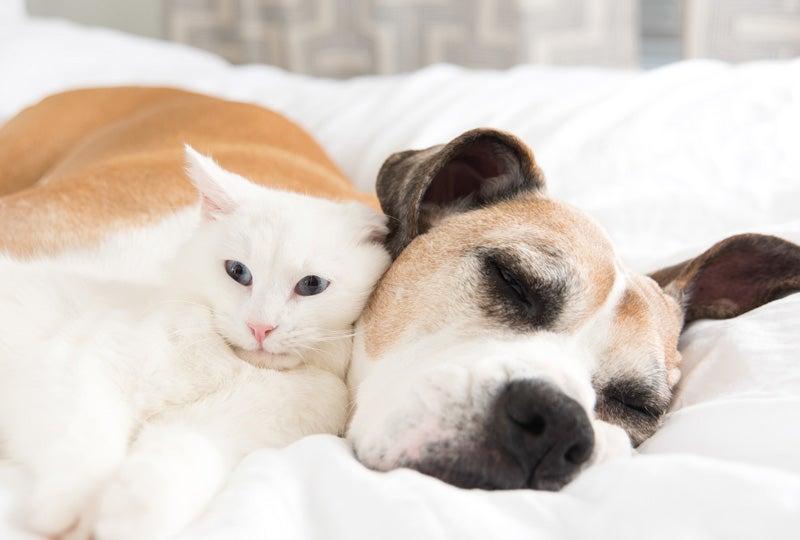Blog Tips voor de aanschaf van een huisdier