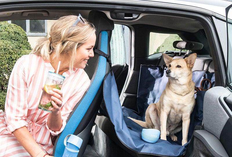Blog Honden in de auto