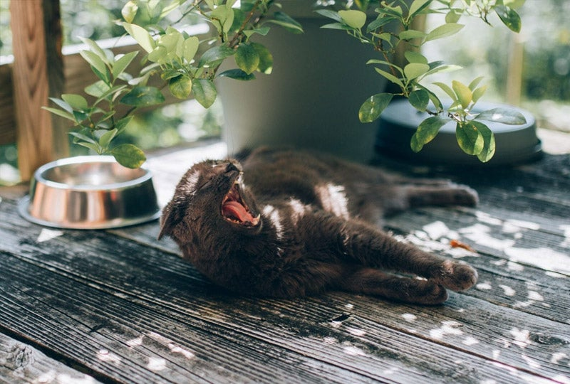 Blog 5 Tips voor je huisdier bij hitte