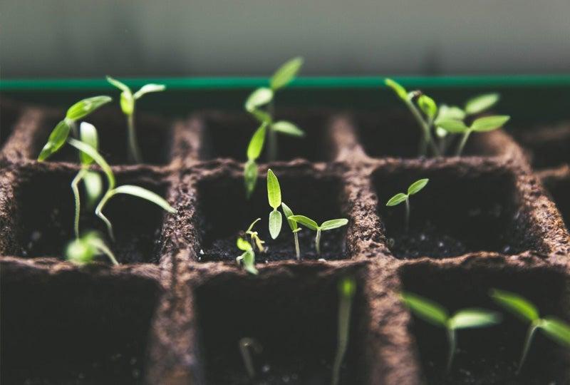 Blog Moestuin aanleggen, planten & bemesten