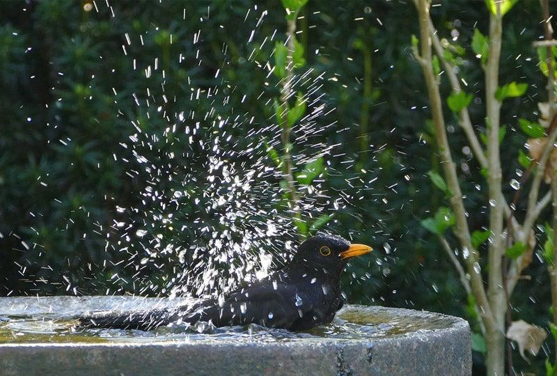 Blog Help vogels de hitte door