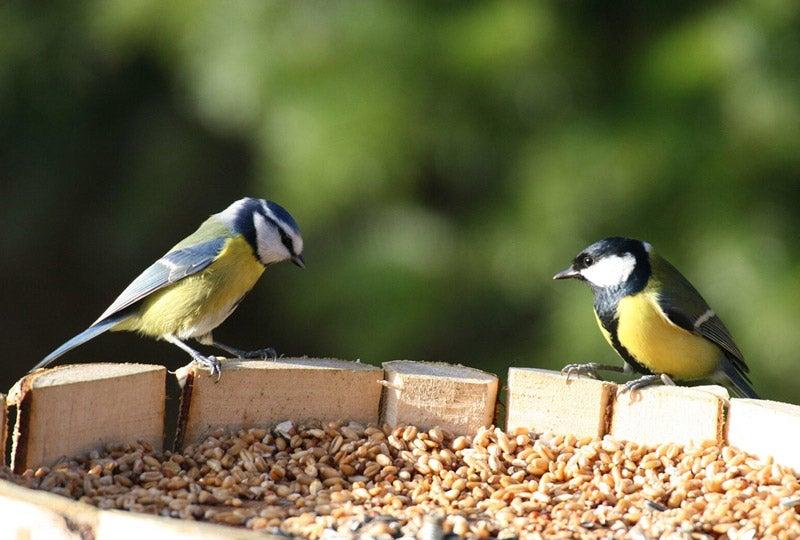 Blog Tuinvogels voeren