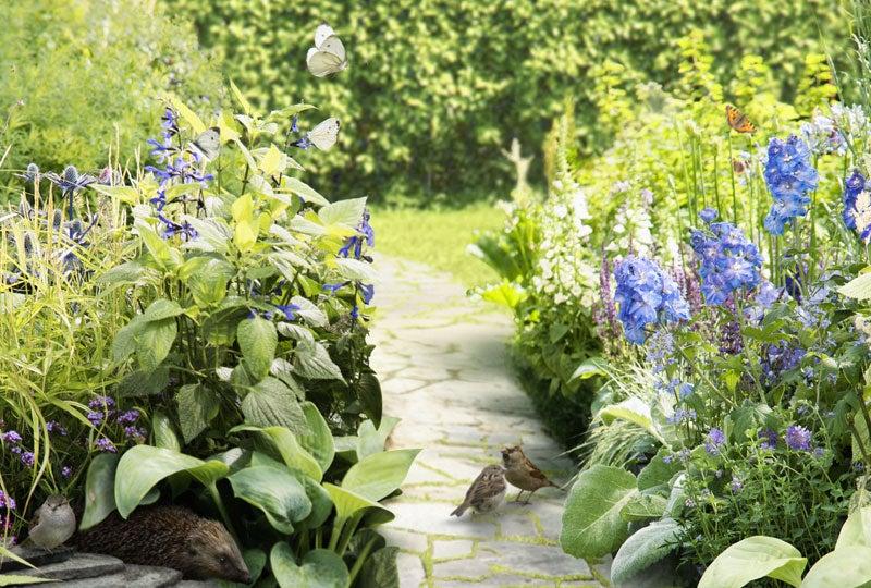 Blog: wat is biodiversiteit in de tuin