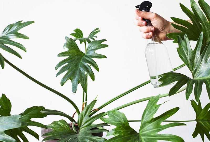 Blog:Luchtvochtigheid voor je kamerplanten