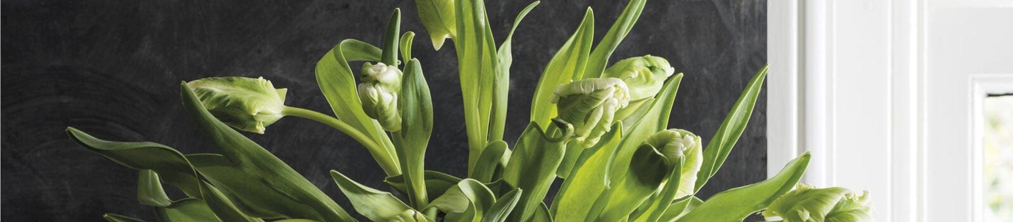 Alles over tulpen