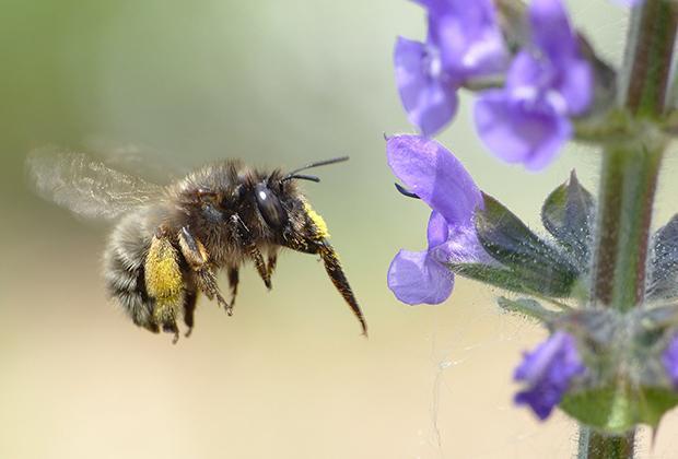 De verschillende bijensoorten in jouw tuin