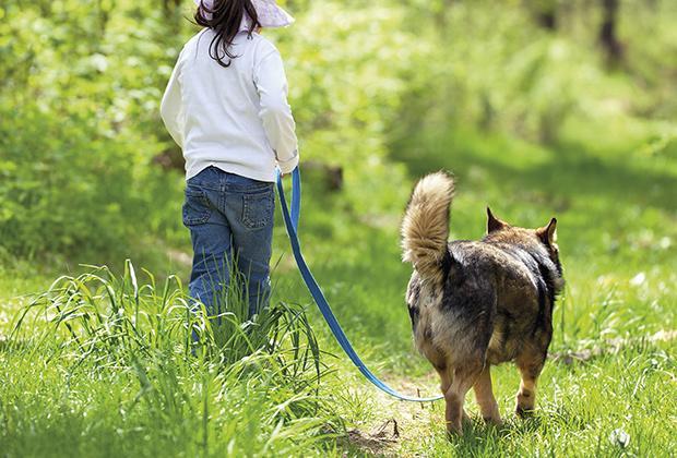 Hondenriem met hondentuig of hondenhalsband kiezen