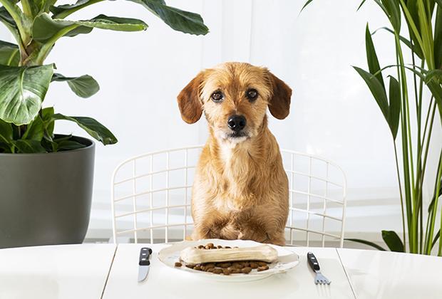 Hondenvoer en beste hondenbrokken kiezen voor je hond