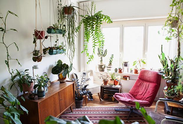 Zo hou je kamerplanten gelukkig in de herfst en winter