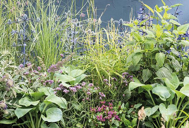 Leg een insectenlokkende tuin border aan