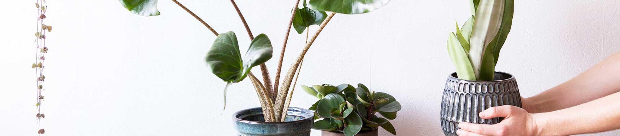 Zo kies je de juiste plant voor jouw huis