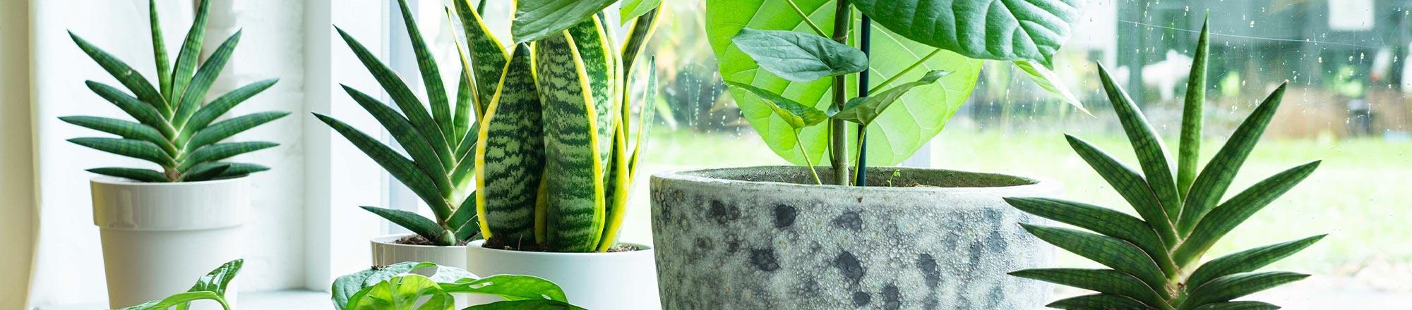 Kamerplanten verzorgen