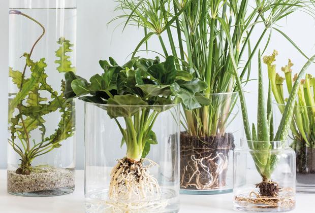 Kamerplanten achter glas