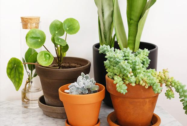 Kamerplanten voor beginners