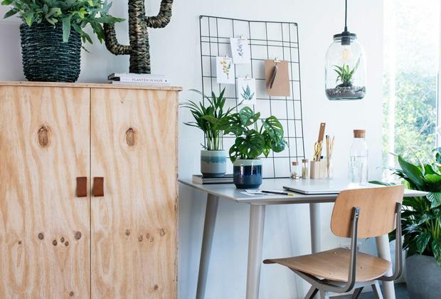 Kamerplanten voor op je werkplek