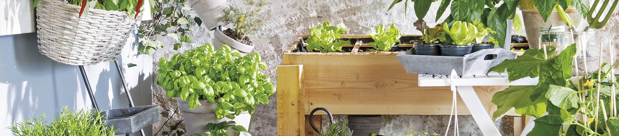 Kleine moestuin op balkon of terras
