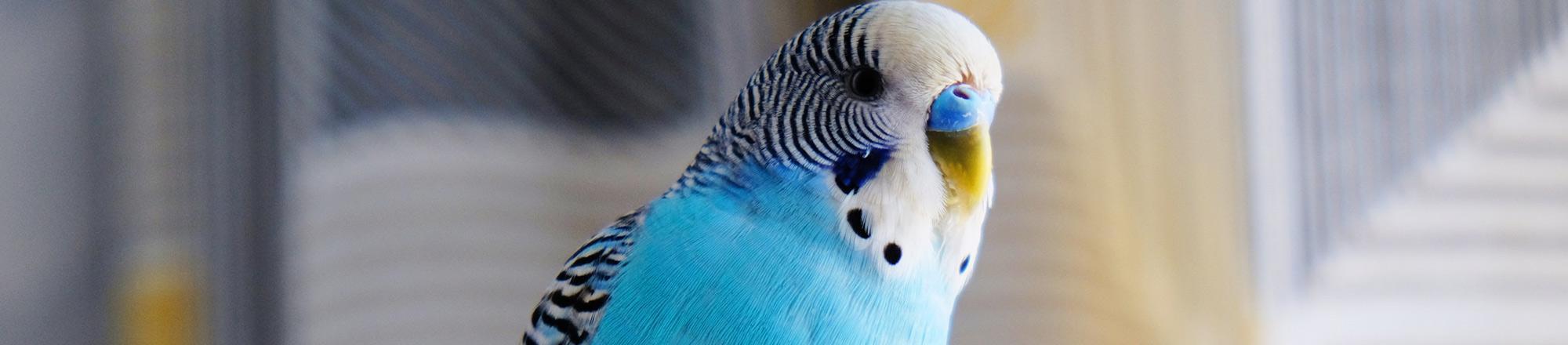 De 10 belangrijkste tips bij het aanschaffen van een vogel