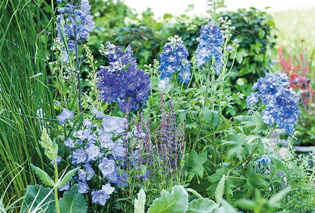 Een plukbloemen border voor boeketten uit eigen tuin