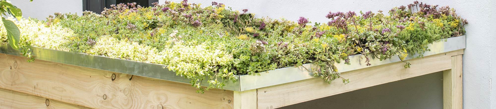 Sedumdak maken? Een groen dak met Sedum