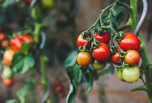Zelf groente kweken in de moestuin