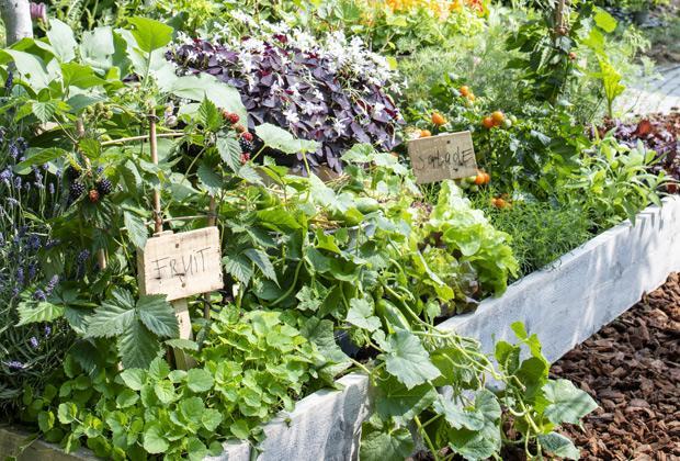 Tuin border met groente of kruiden aanleggen