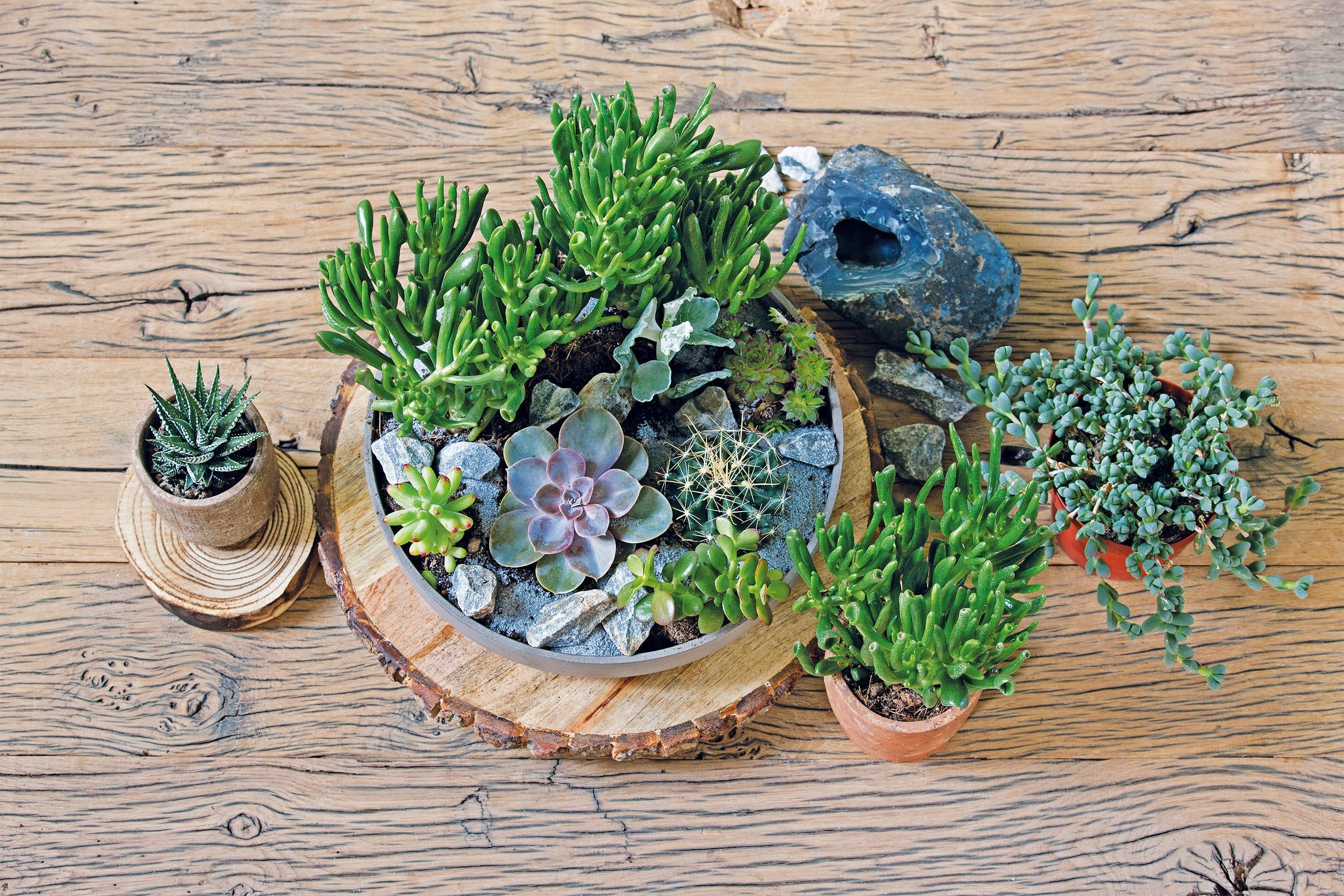 DIY: Vetplanten in schaal