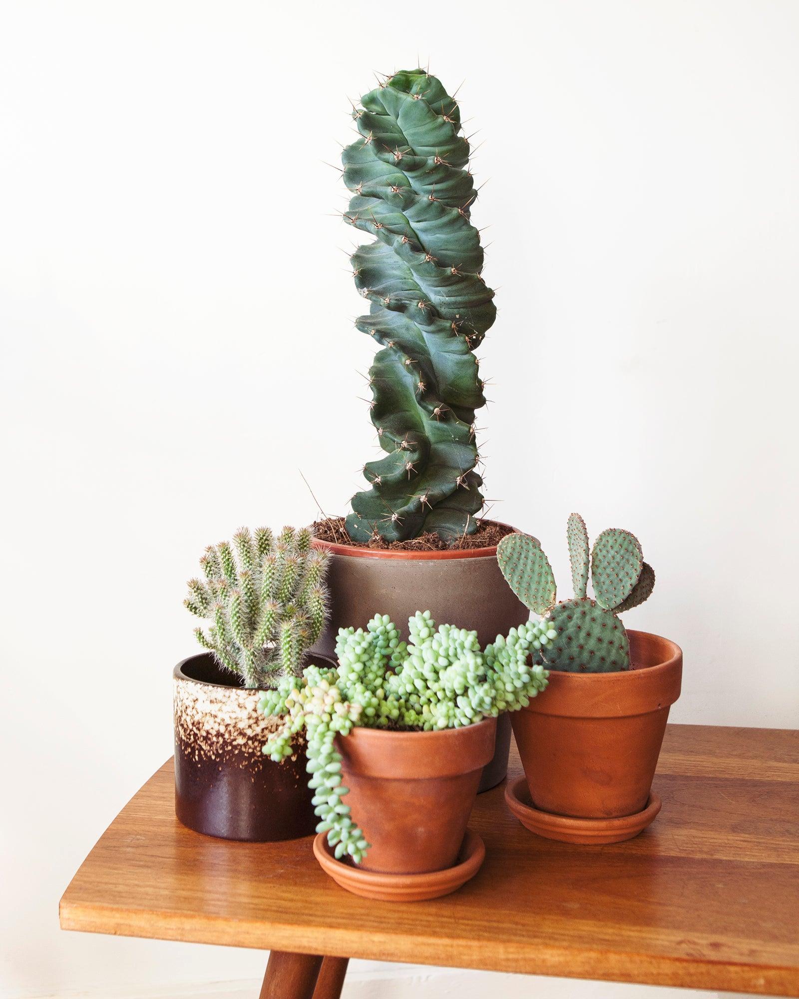 Mama Botanica, cactussen, kamerplanten, vezorging, herfst, winter