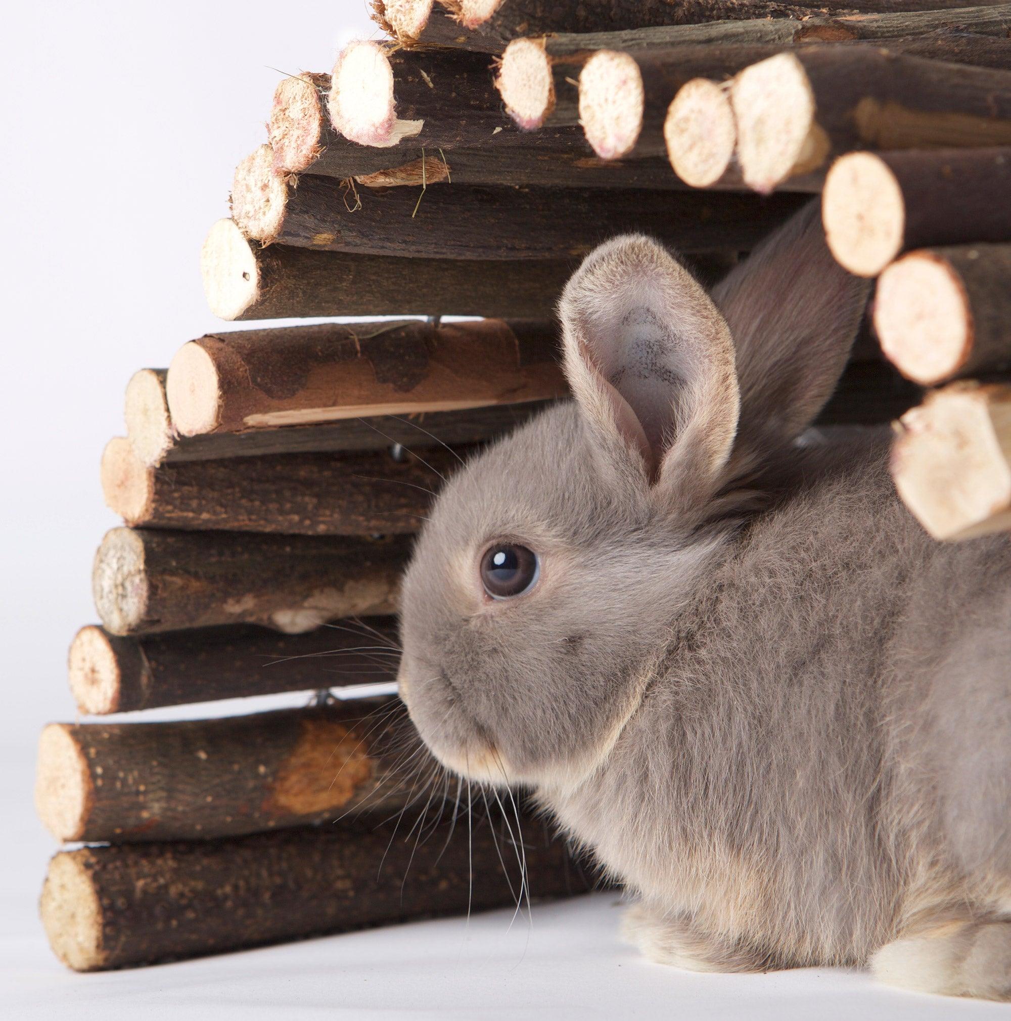 Een nieuw konijn in huis
