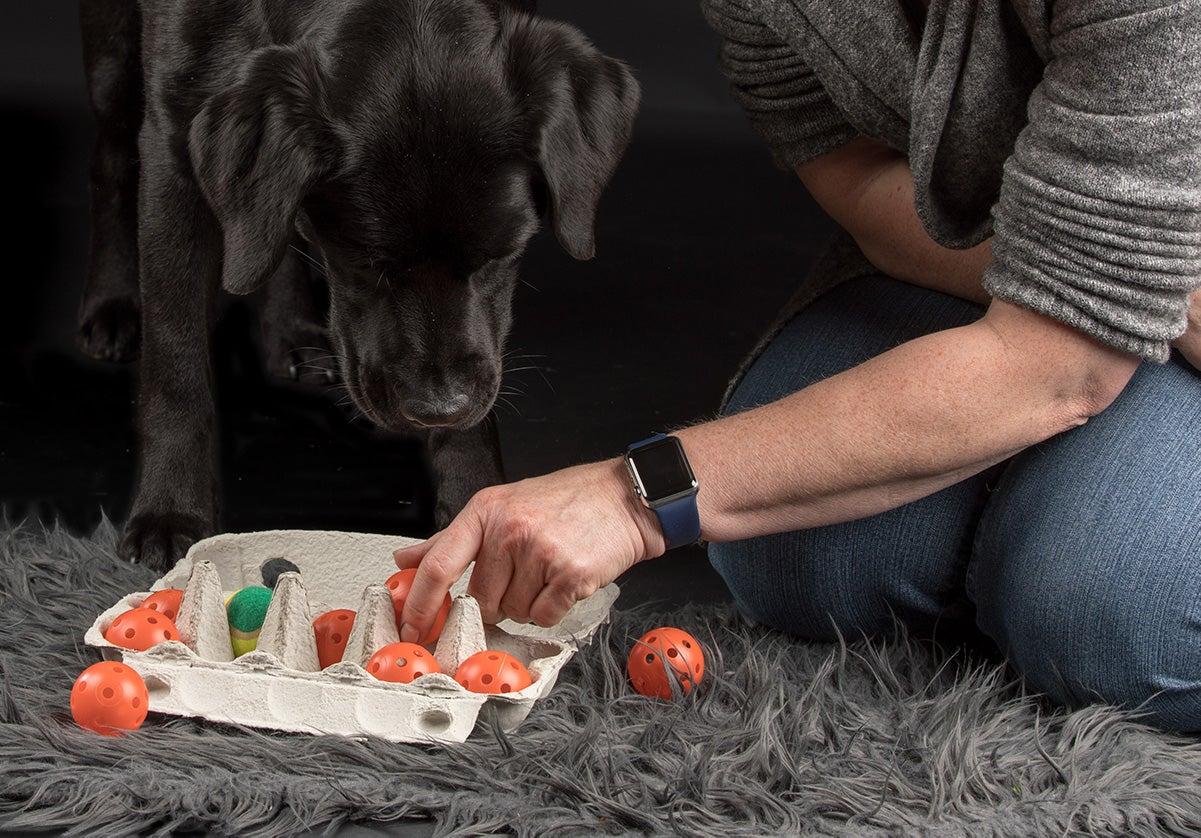 Hond, spelen, eierdoos