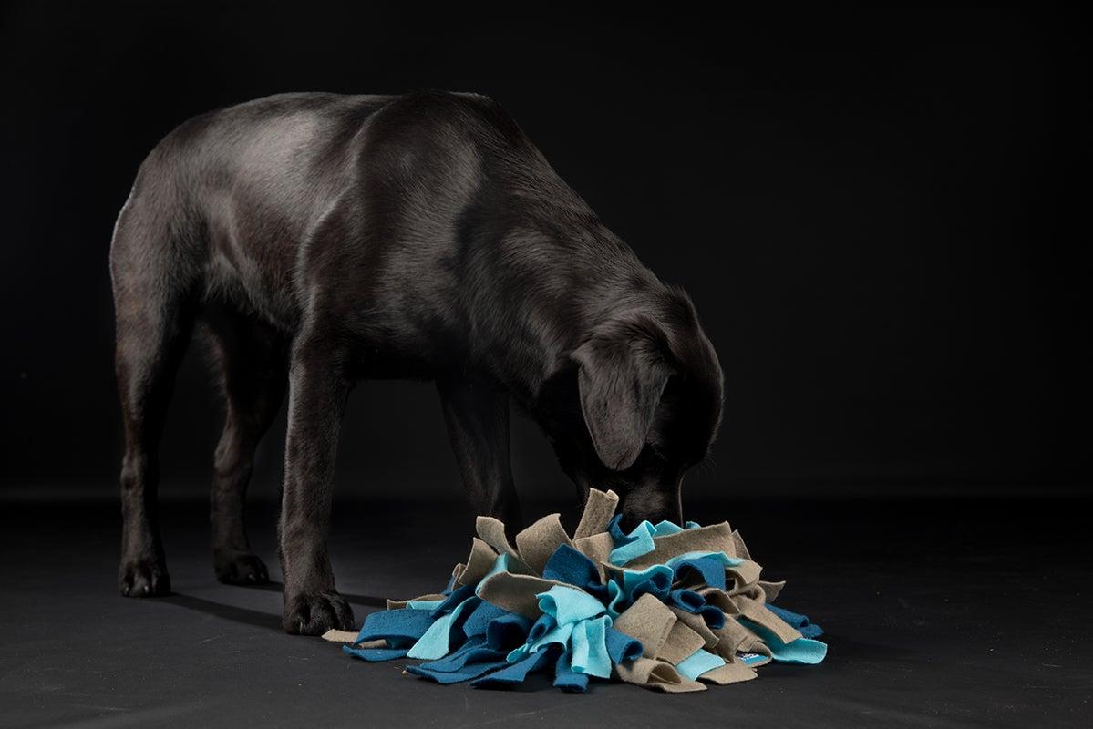 Hond, snuffelmat