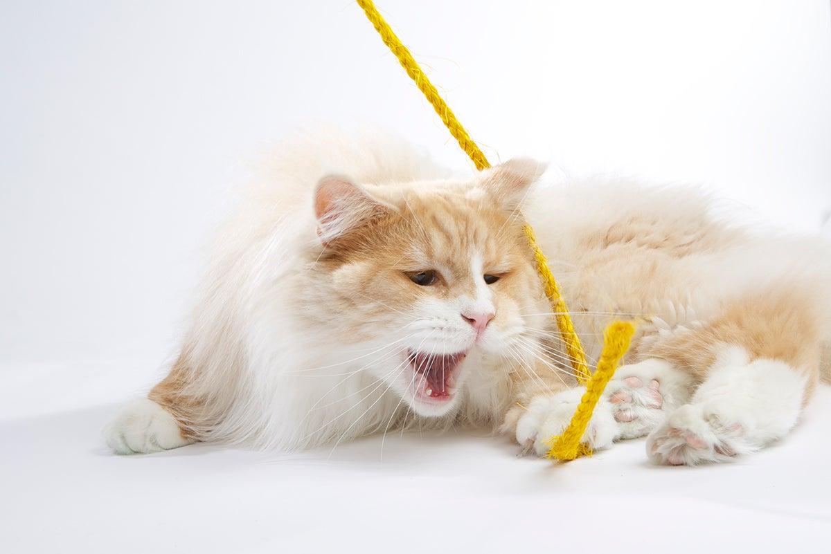 kat, spelen
