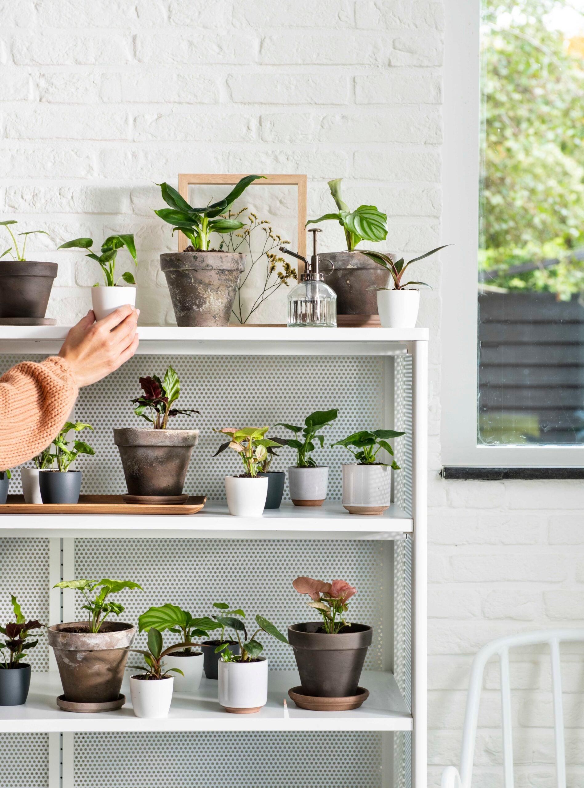 kamerplanten. potten, kast, plantenspuit