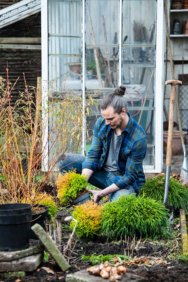 Aanplanten in het najaar