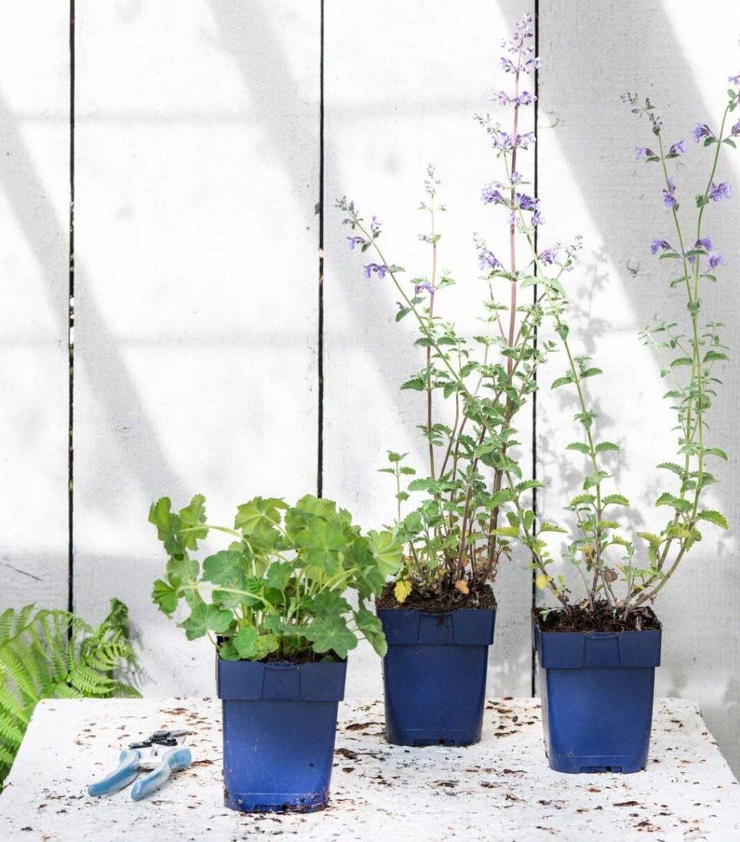 Planten voor in een border