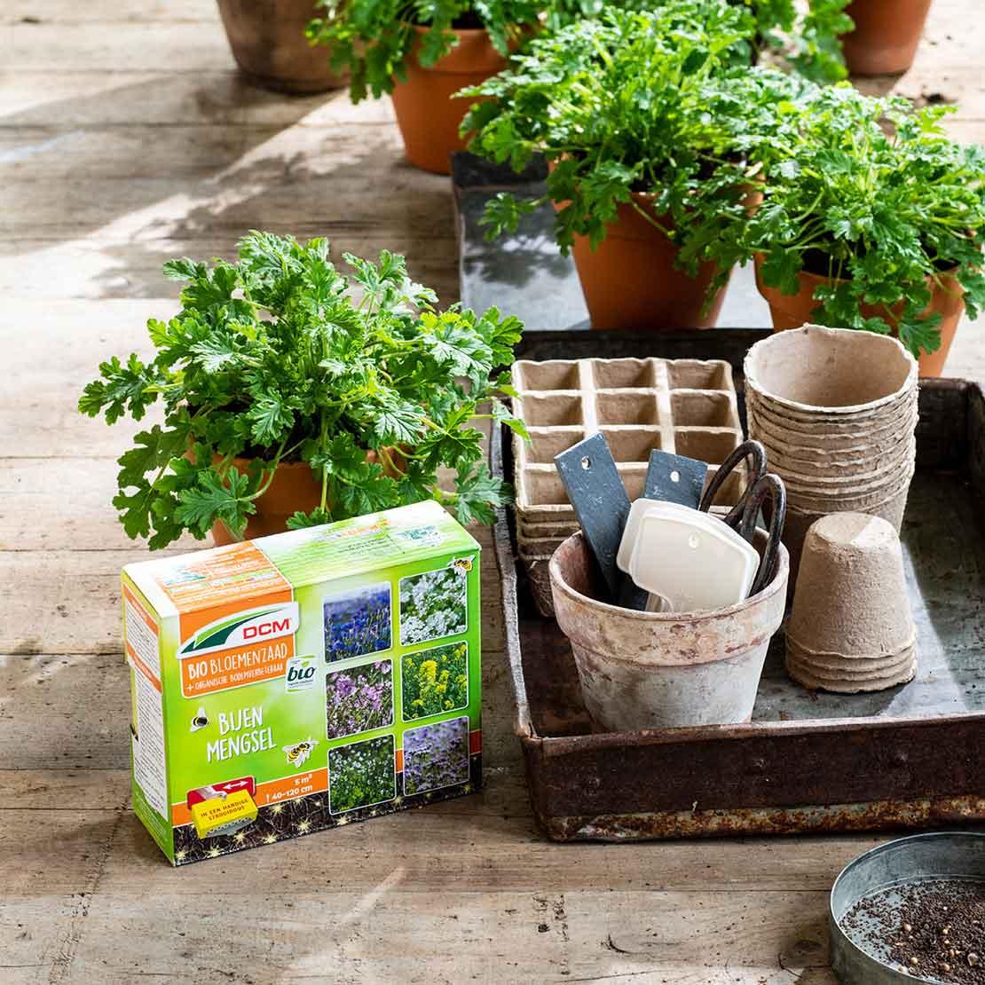 Kruidenplantjes op tafel