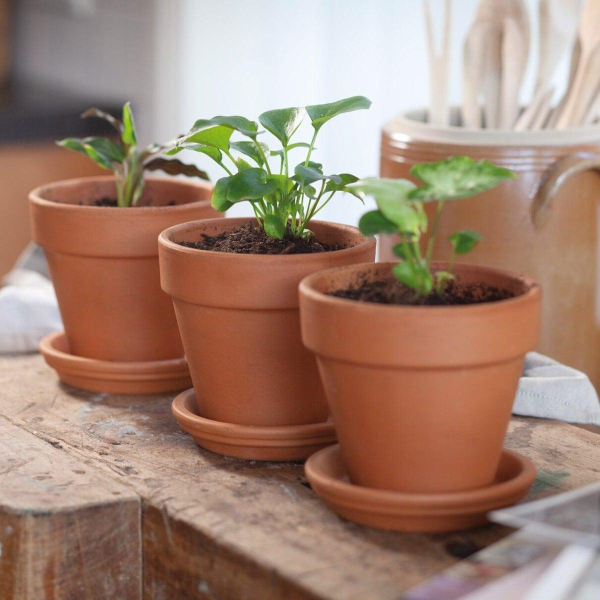 Babyplantjes in terracotta potjes