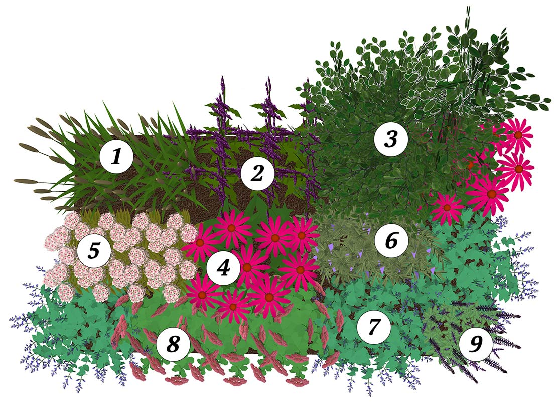 Volle zon border beplantingsplan