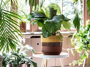 Alle blogs over kamerplanten
