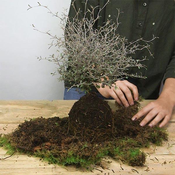 DIY Kerst kokedama, stap 2: De kluit bekleden met mos