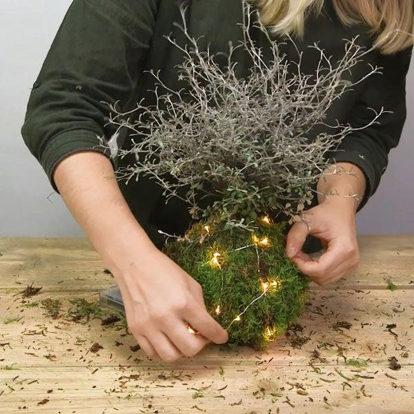 DIY Kerst kokedama, stap 5: Verlichting om het mos heen doen
