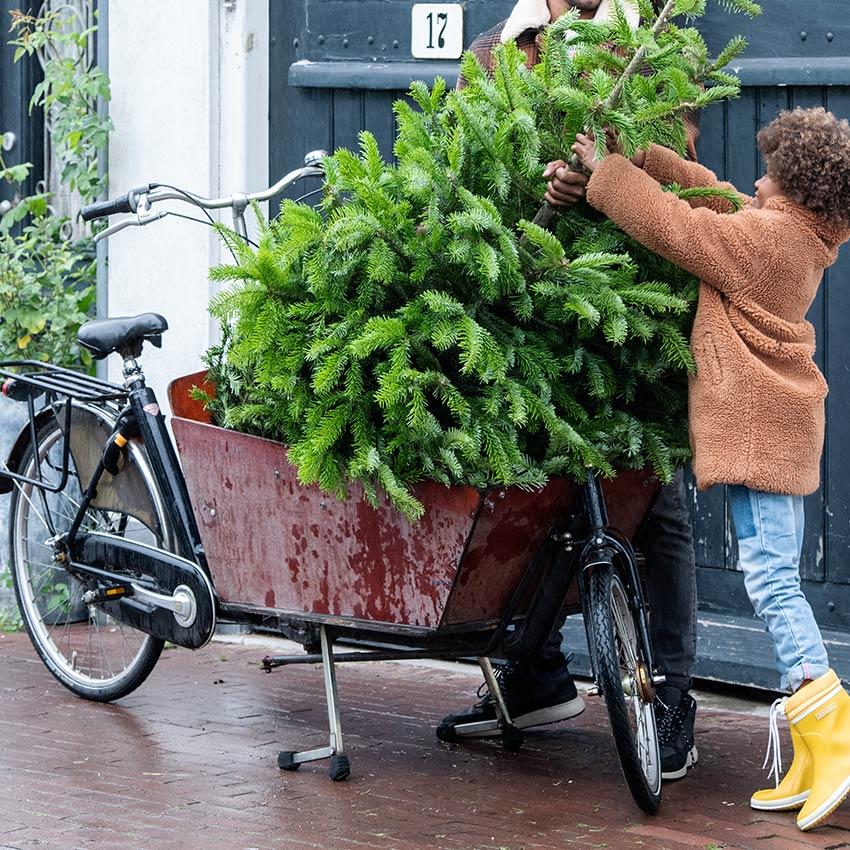 Kerstboom in bakfiets