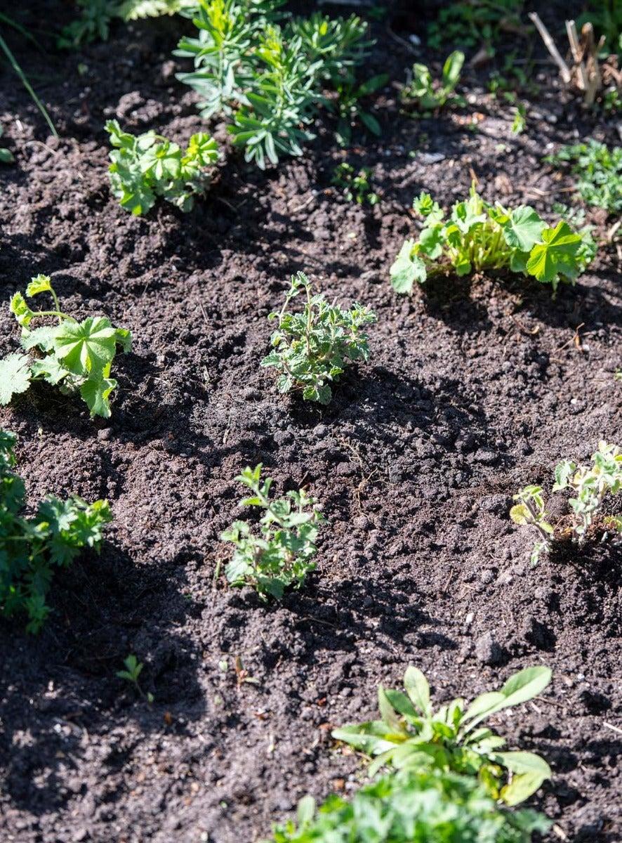 Net aangeplantte tuin