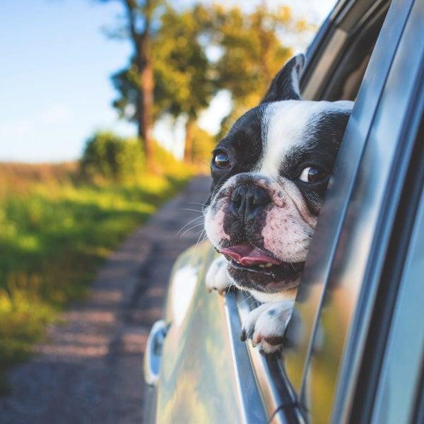 Hond op hondenkussen buiten