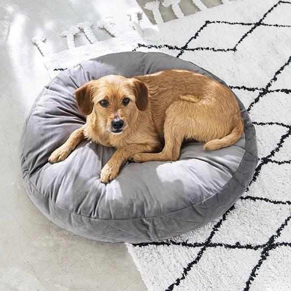 Hond op rond hondenkussen binnen