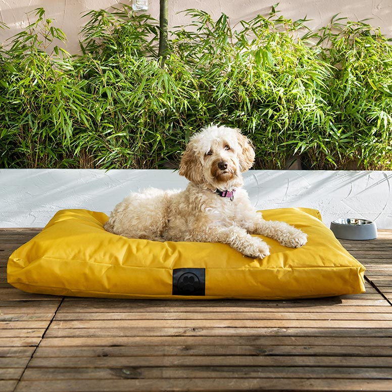 Hond op geel hondenkussen buiten