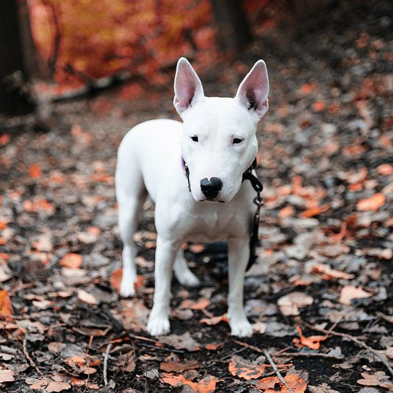 Hond in bos
