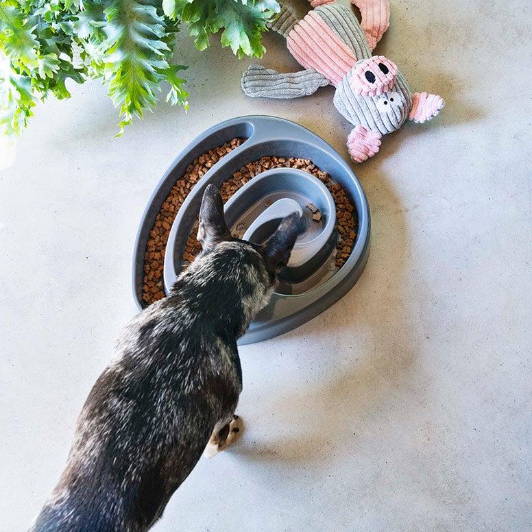 Hond eet uit anti-schrokbak