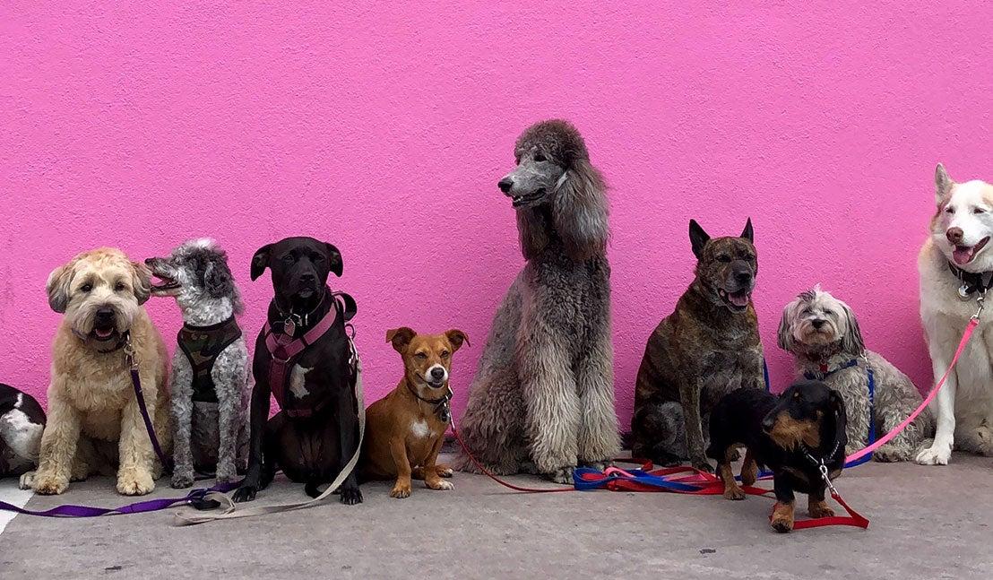 Diverse soorten honden op een rij