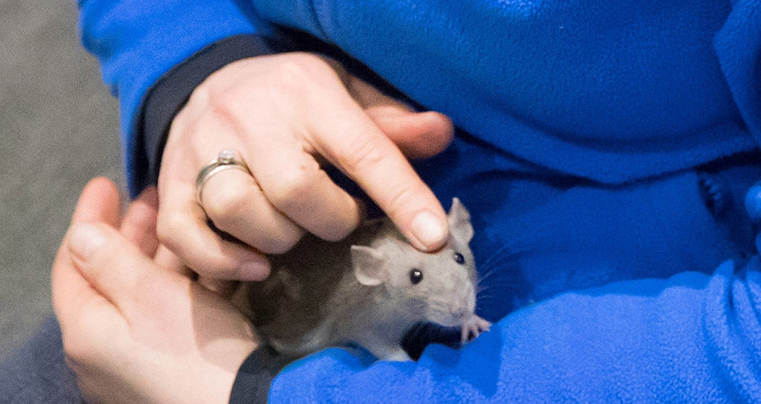 Knuffelen met een muis