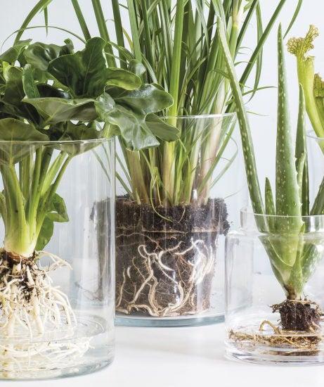 Kamerplanten op water